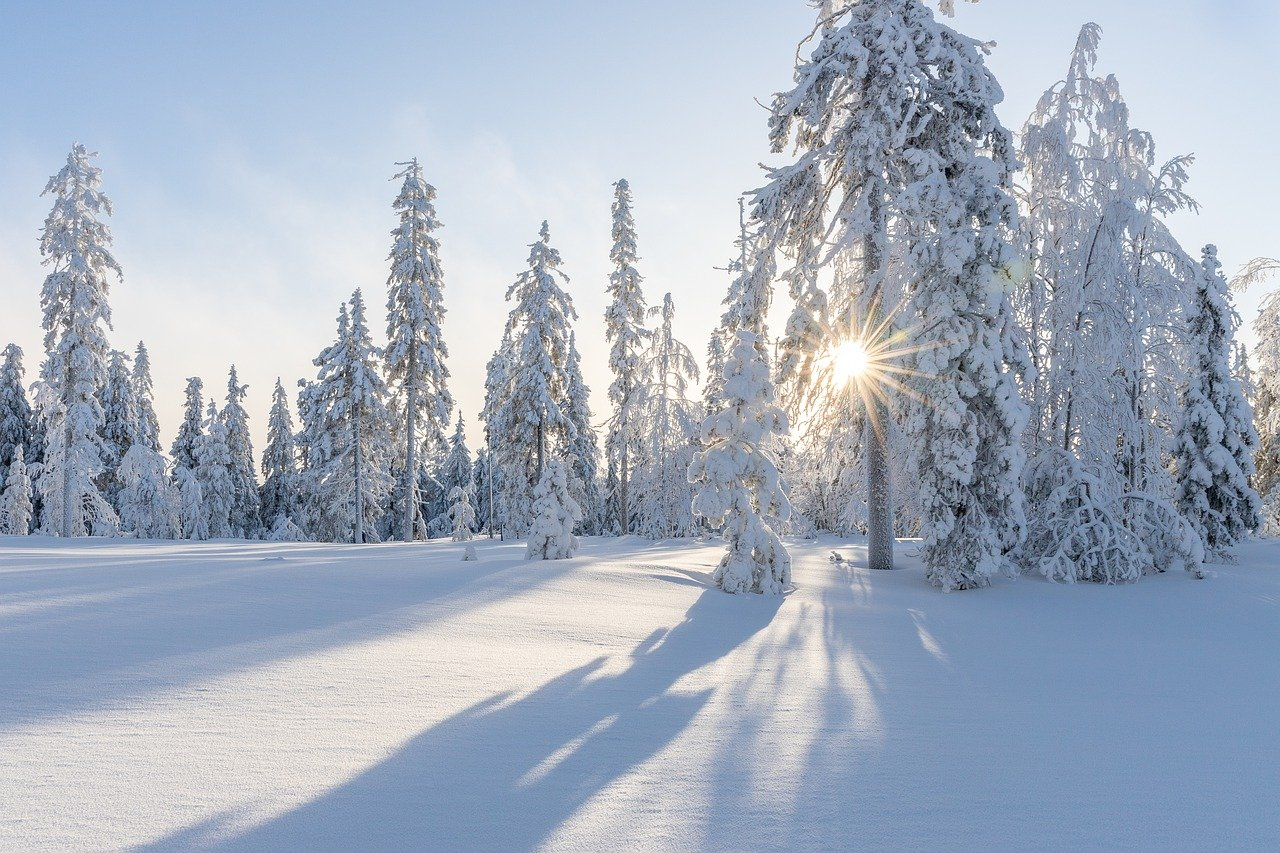 trees, winter, snow